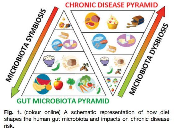 Microbiota y Alimentos